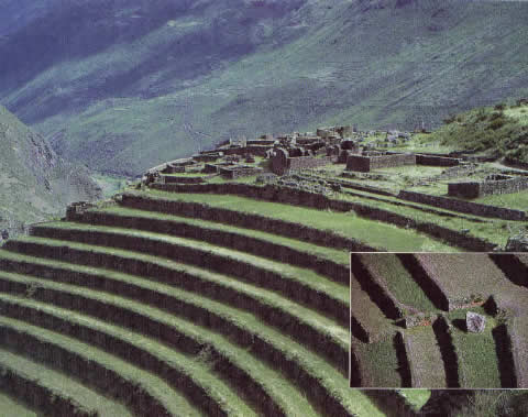 Inca farming crops for Terrace farming definition